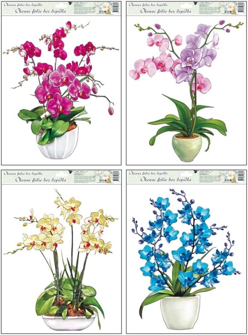 Fólie na okna orchideje 38x30cm (887)